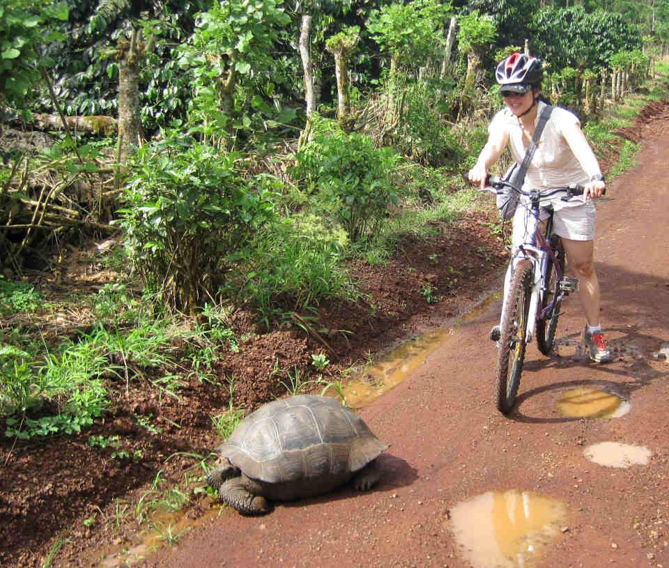 biking_giant-tortoise_SantaCruz-1.jpg